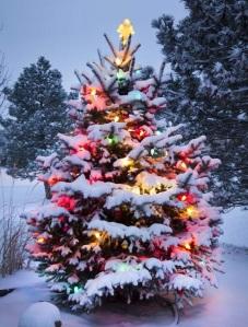 Outdoor chirstmas tree decoration 2014