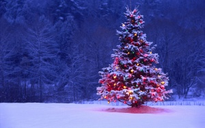 Snowy outdoor decorated Christmas tree 2014